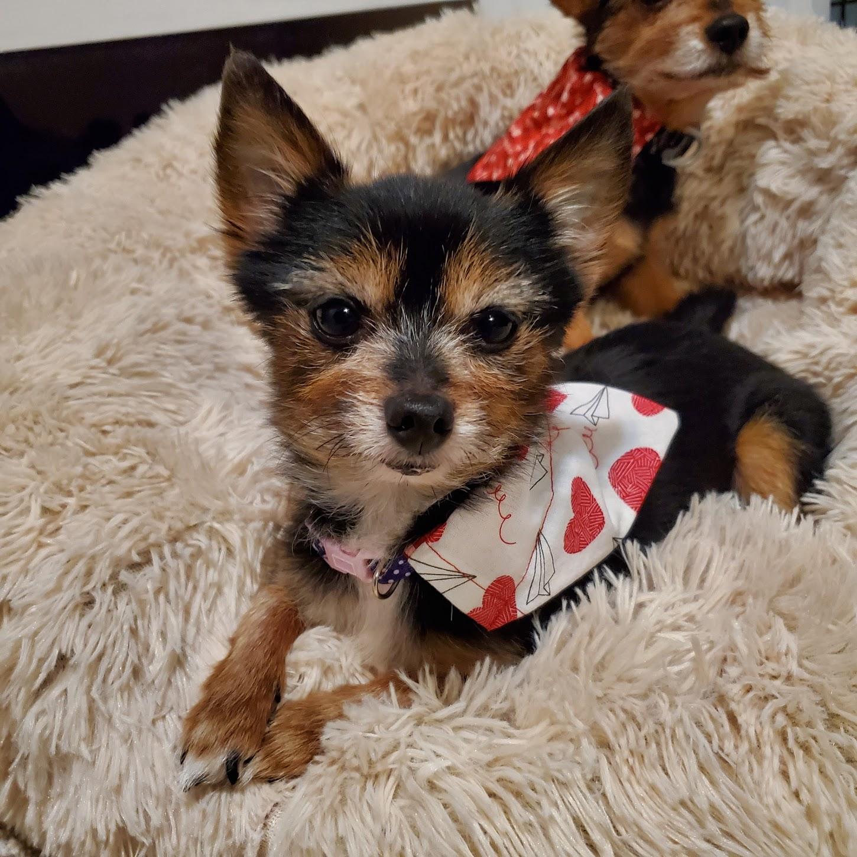 Abner & Aggie Photo