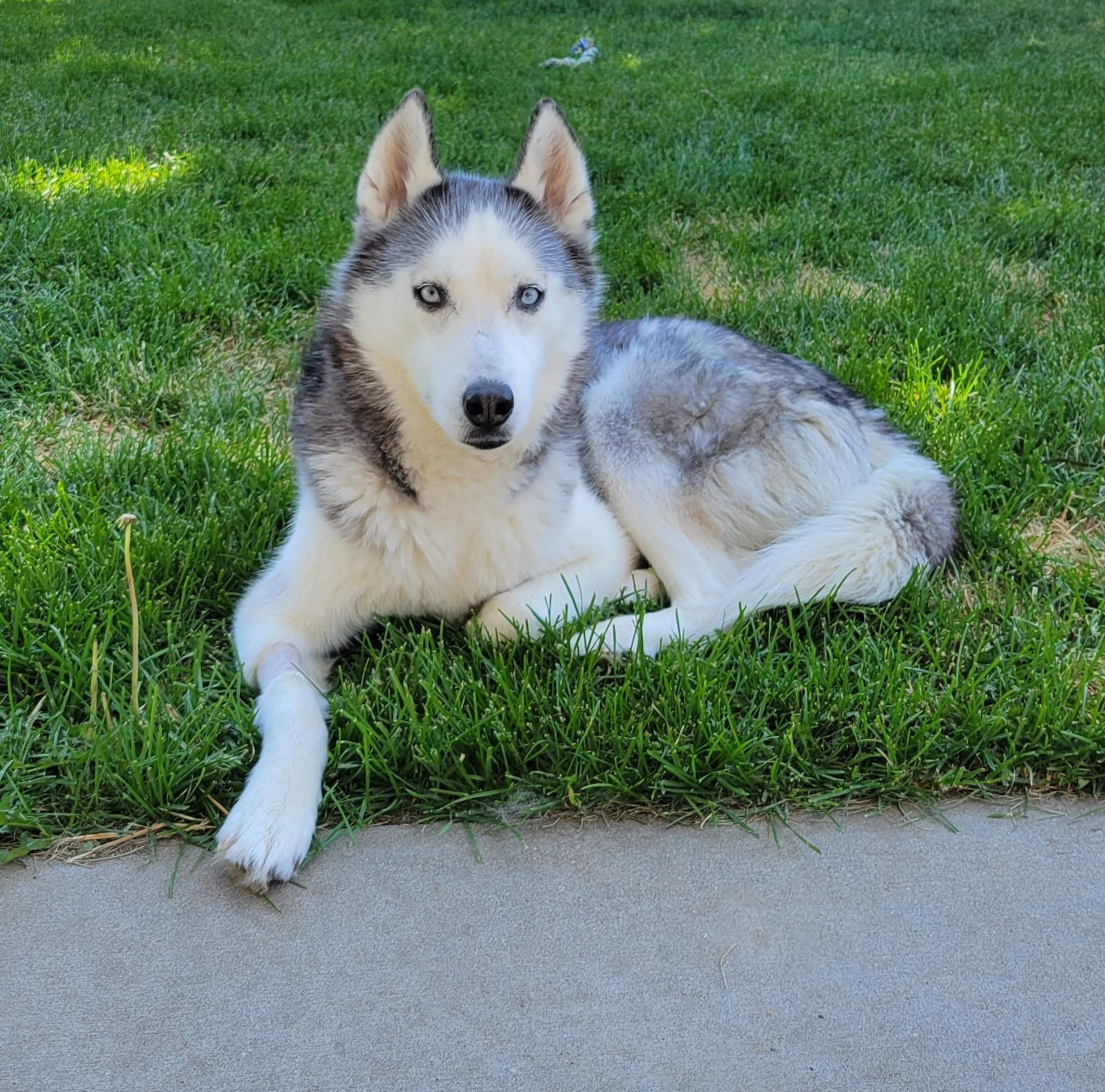 Dakota Photo