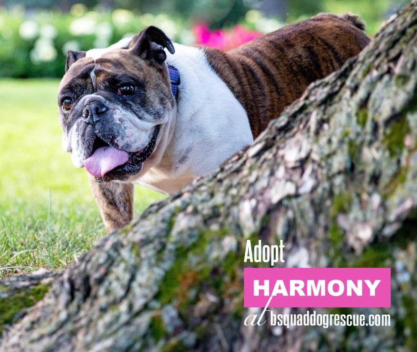 Harmony Photo
